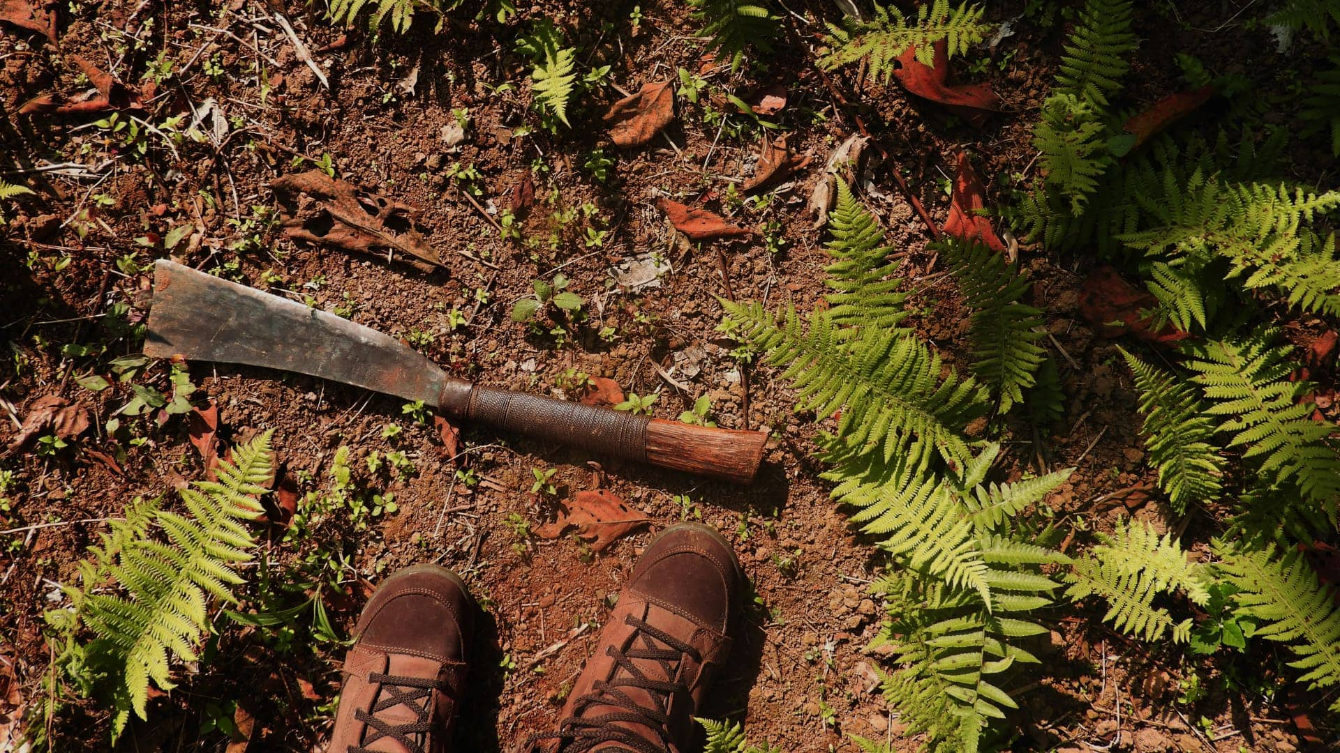 Wilderness Survival – Jungle Survival