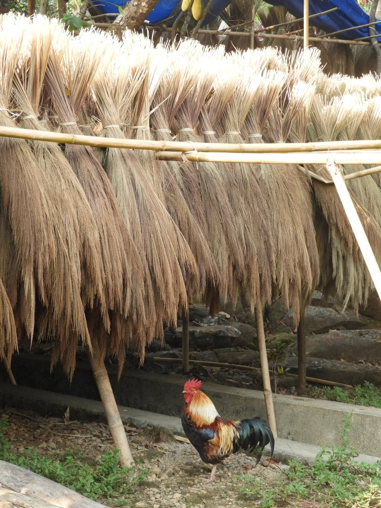 Traditional Broomsticks drying in Mawlynnong, Meghalaya, Northeast India