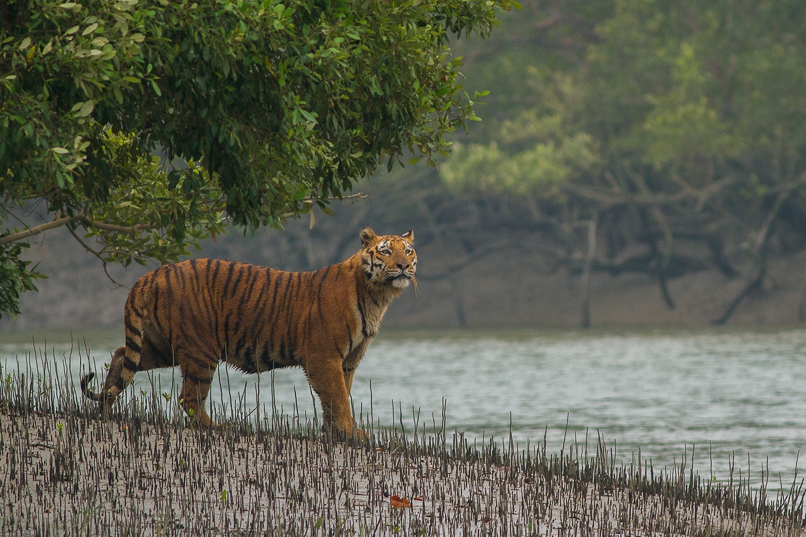 Animals in India, where to observe wild animals?